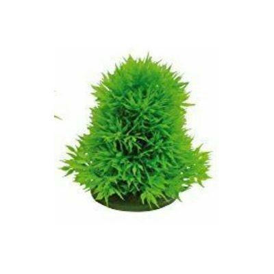 Croci ukrasna biljka za akvarij